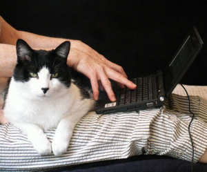 Cat-assisted writer.  (Photo by Greg Uchrin)